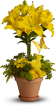 Yellow Fellow